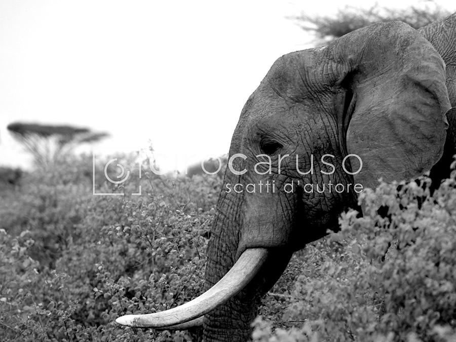 Kenya_08